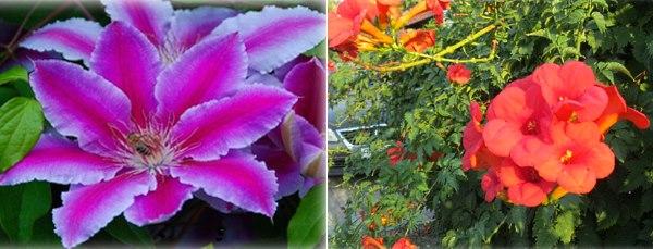 Какие вьющиеся растения выбрать для дачи — рекомендации.