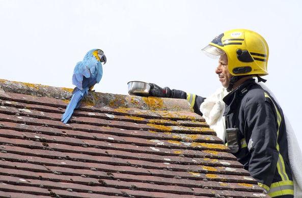 Попугай-грубиян послал спасателей подальше