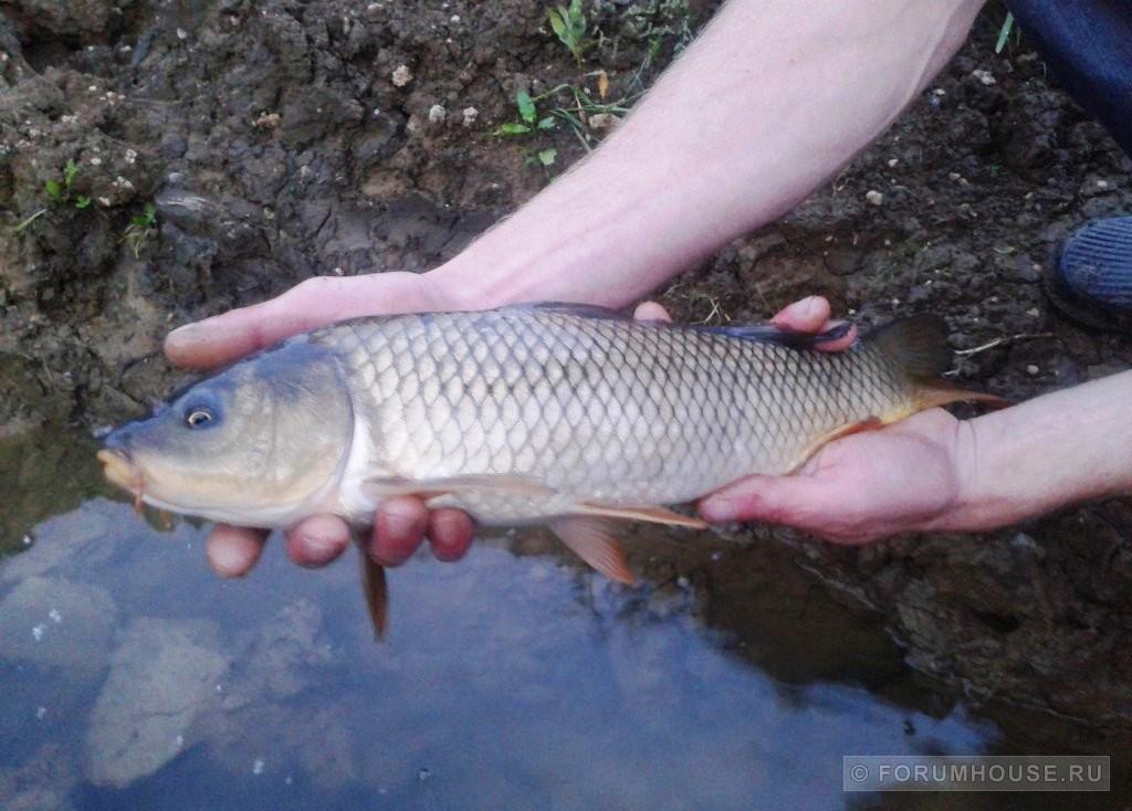 Рыба со своего огорода.Ах,рыбалка.