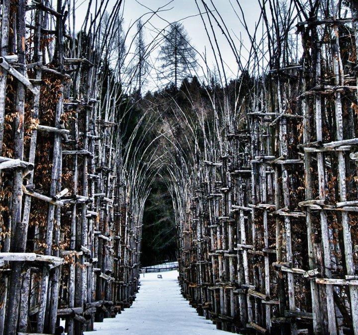 собор из деревьев джулиано маури (6)