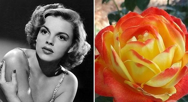 ТОП-10 самых красивых именных роз и их звездных владельцев