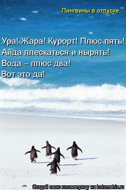 Котоматрица: Ура! Жара! Курорт! Плюс пять! Айда плескаться и нырять! Вода – плюс два! Вот это да! Пингвины в отпуске.