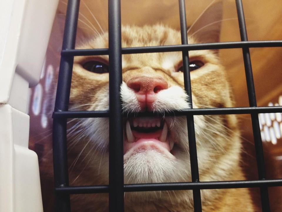 Котики у ветеринара