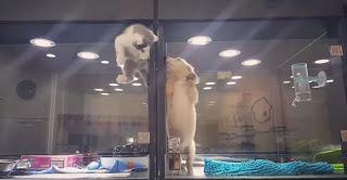 Котёнок совершил эпичный побег из зоомагазина, чтобы получить первый поцелуй от друга-щенка