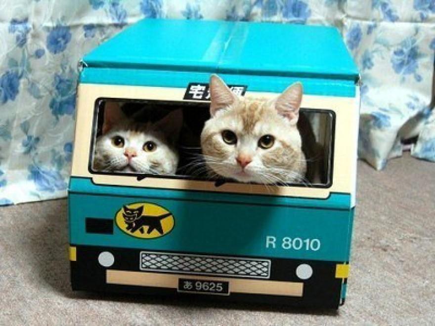 lolcats83 100 лучших фотографий кошек всех времен и народов
