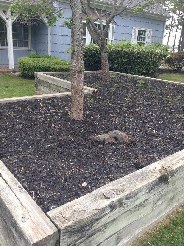 Хозяин этого дома вышел утром во двор и увидел что-то необычное на клумбе…