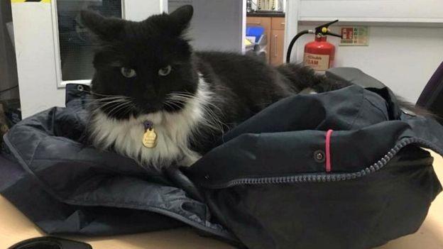Кошка-контролёр животные, книга рекордов гиннеса, коты, мир