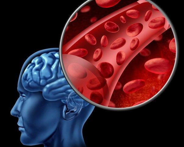 Народные средства для улучшения мозгового кровообращения