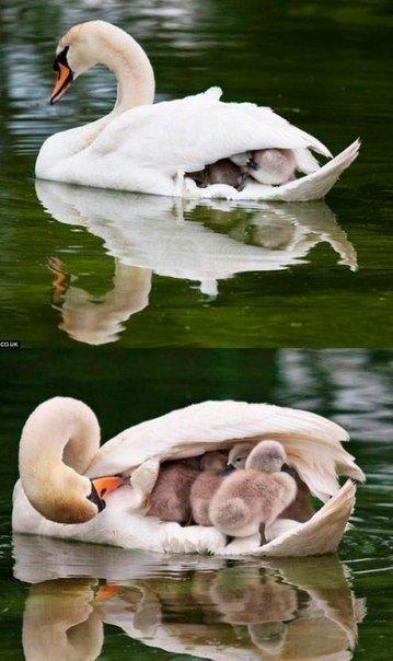 Любящая мама))