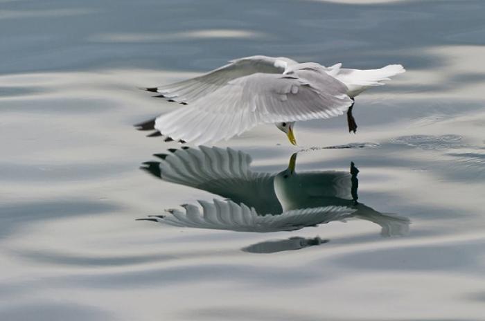 Белоснежная птица, развеет все сомнения.