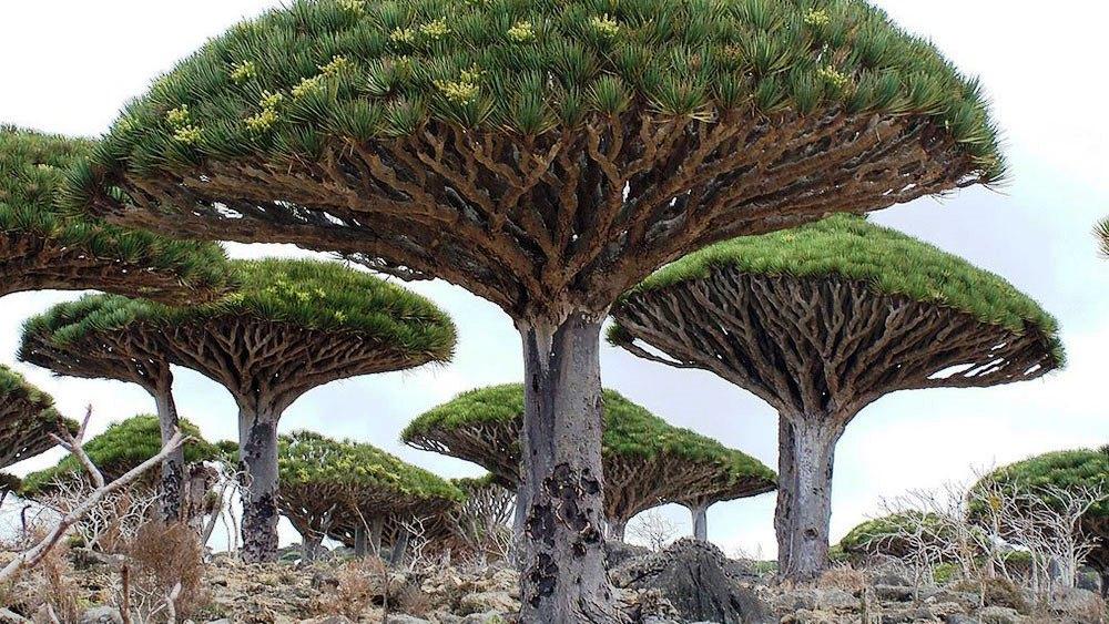 Доисторический мир острова Сокотра