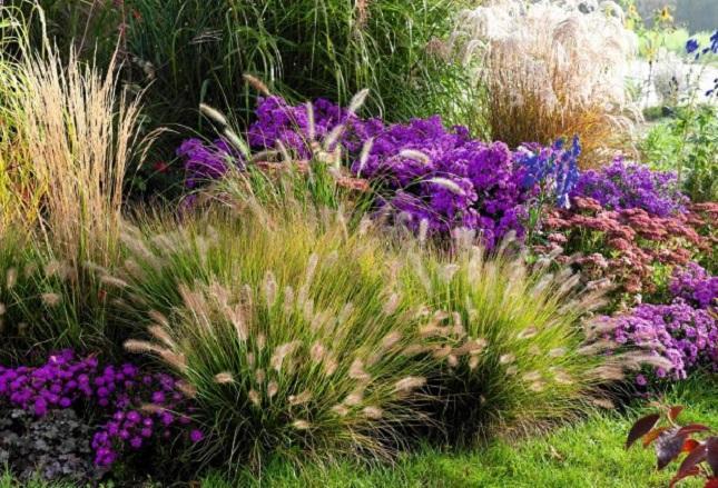 Миксбордер с декоративными травами