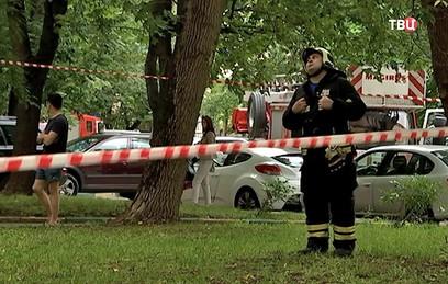 В Москве спасатели сняли с дерева полутораметровую змею