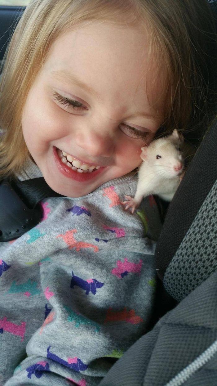 Нет, определённо, их не за что любить животные, крыса, милота, позитив