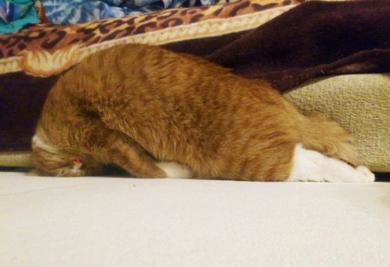 sleepingcats19 Коты, познавшие науку сна