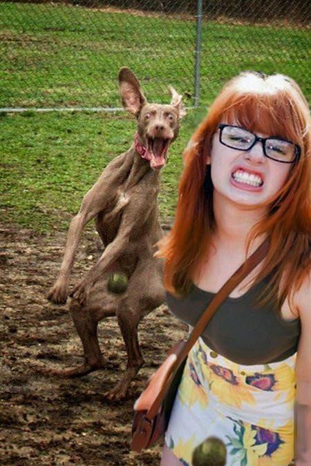 30 веселых фотографий с животными  животные, смешные, удачный кадр, юмор