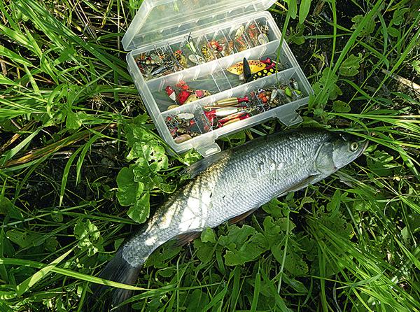 ловля хищной рыбы на раттлины