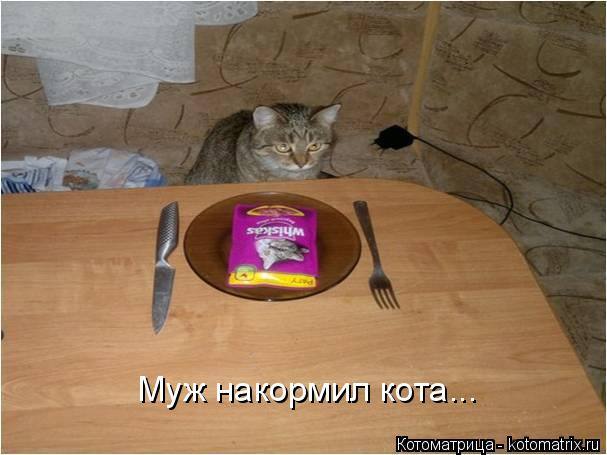 Котоматрица: Муж накормил кота...