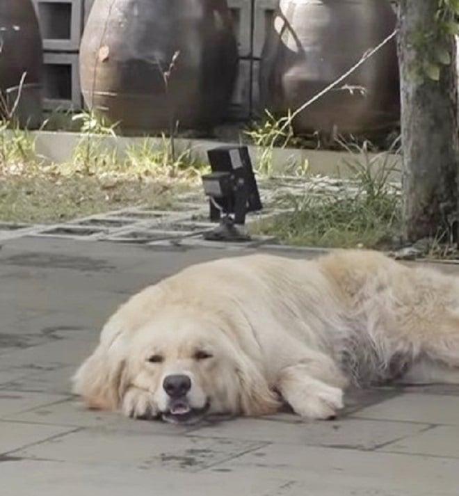 Собака стала избегать щенков, и хозяин не знал, что и думать! И только доктору удалось помочь хвостатой мамочке…