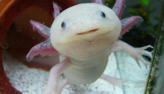 Животные супер-герои: жук навозный, медуза, осьминог идругие
