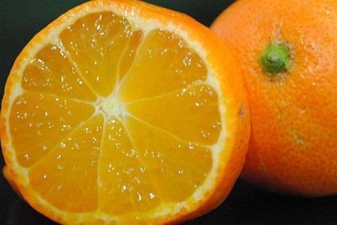 15. Рангпур (лимандарин) гибрид, еда, фрукты