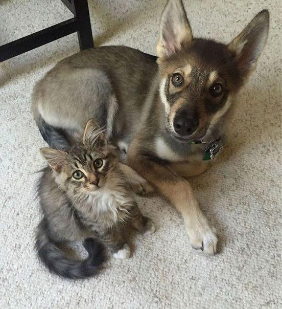 Как кошка с собакой ;)