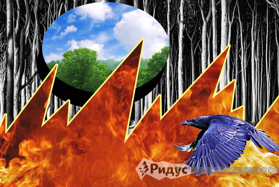 О лесных пожарах и их связью…