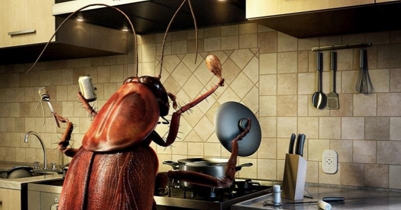 Таракан как избавиться в домашних условиях