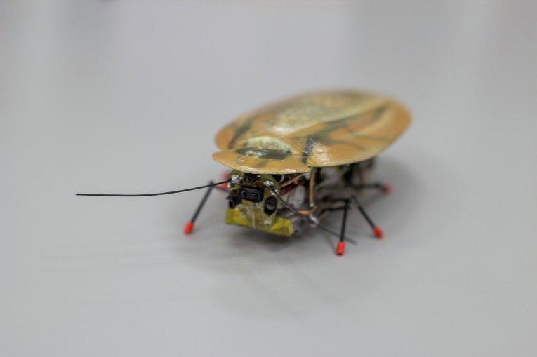 В Калининграде создан уникальный таракан-разведчик