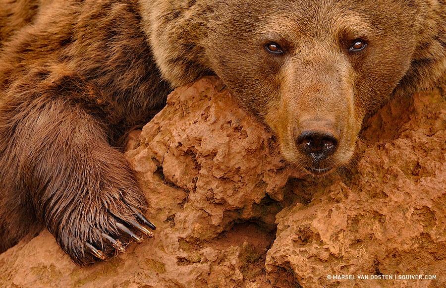 20 красивых фотографий дикой природы