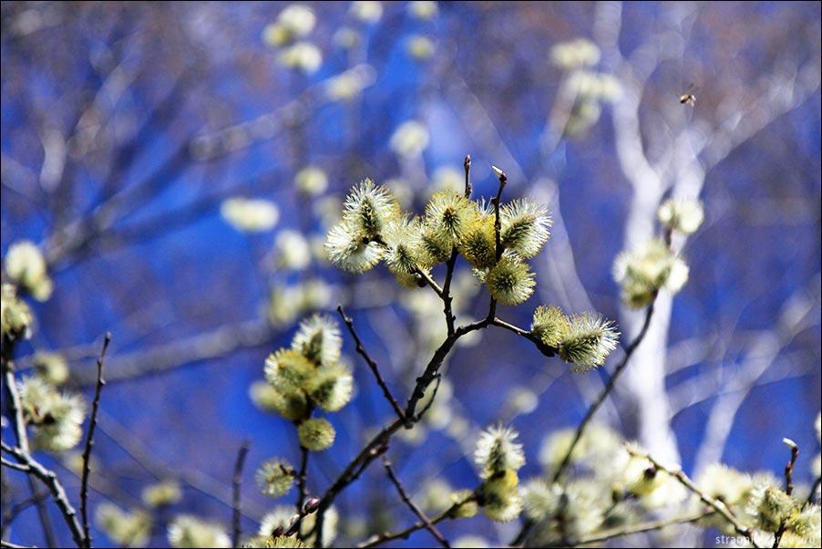 Весне посвящается