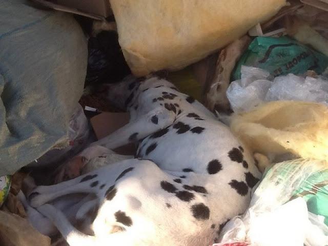 Породистого пса в Тюмени выбросили в мусорный бак.