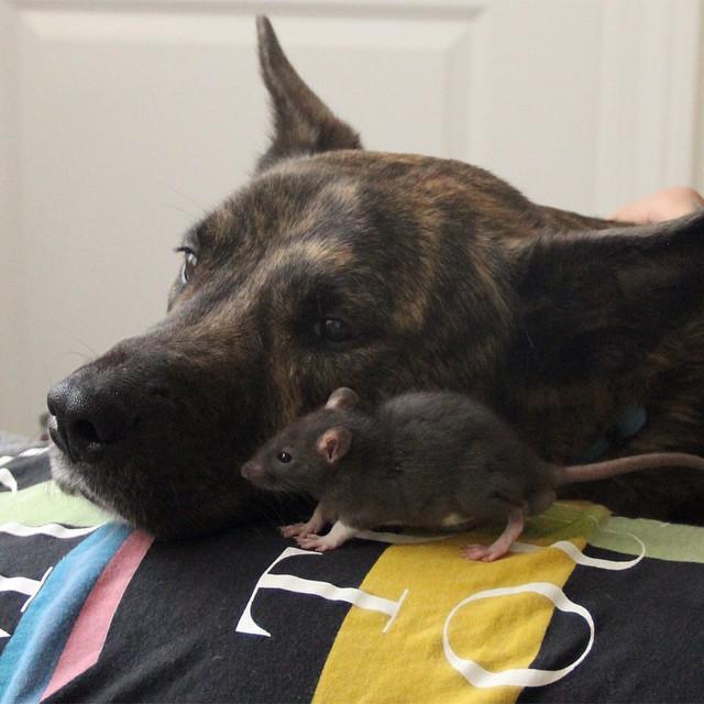 animal-friends-rat-dog-osiris-riff-8