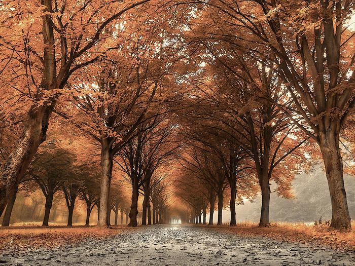 Лесные фантазии света и красок: Lars van de Goor
