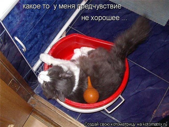 Как сделать котенку клизму в
