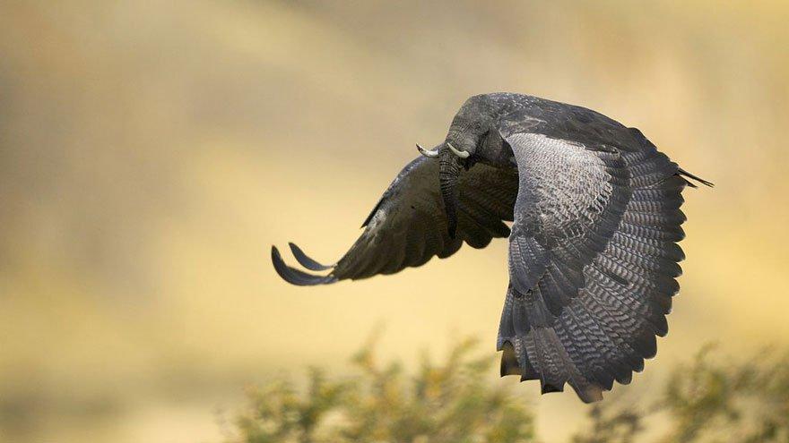 Слоноптиц