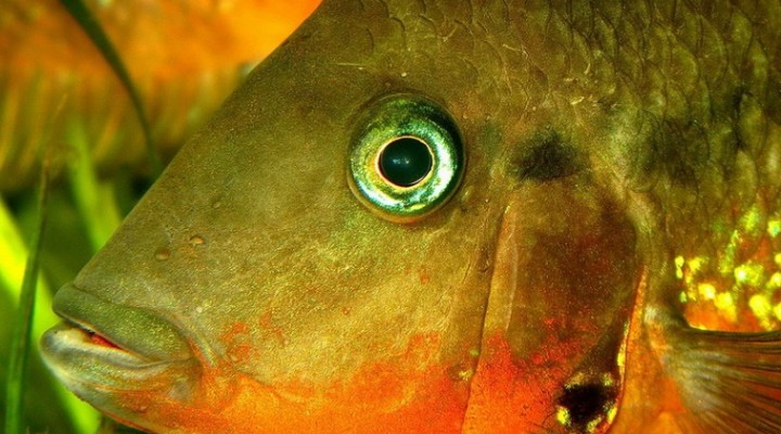 Видит ли рыба леску?