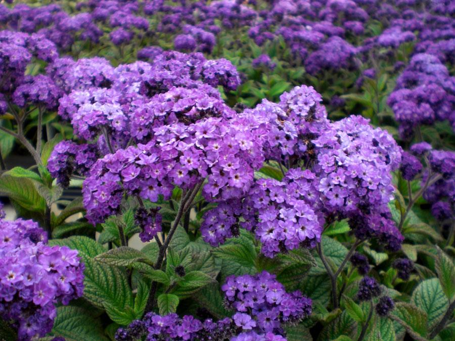 Что посеять в феврале и другие заботы цветовода