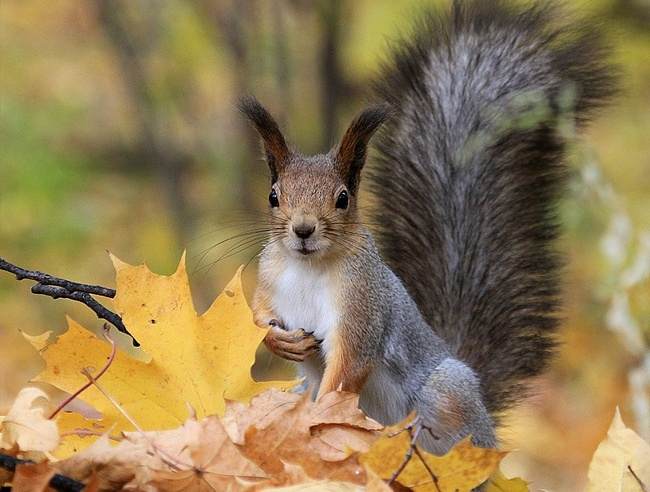 осень и животные 17 (650x492, 319Kb)