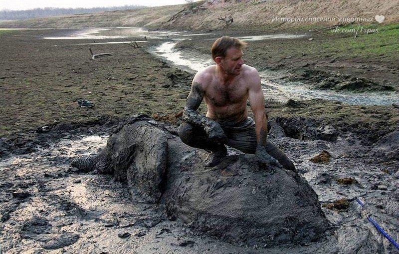 Трудная работа — вытащить слона из болота!