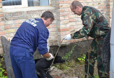 В Эвенкии спасли и выходили упавшего в подвал полупарализованного щенка