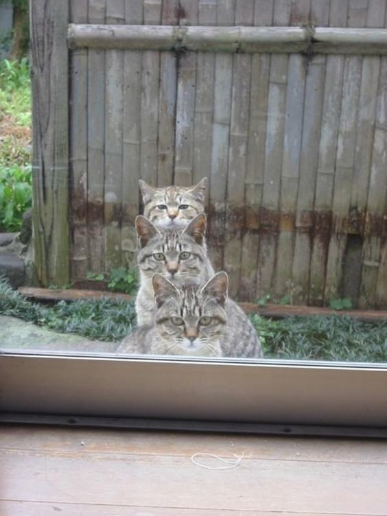 Не понимать, что происходит в доме у соседей коты, милота, поведение, счастье, эмоции