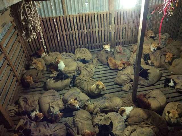 В Индии спасли 36 собак, кот…
