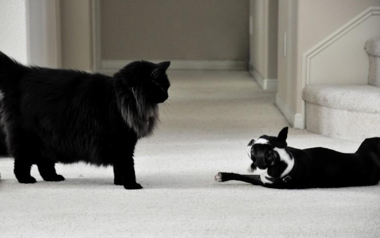 звуки котов слушать онлайн
