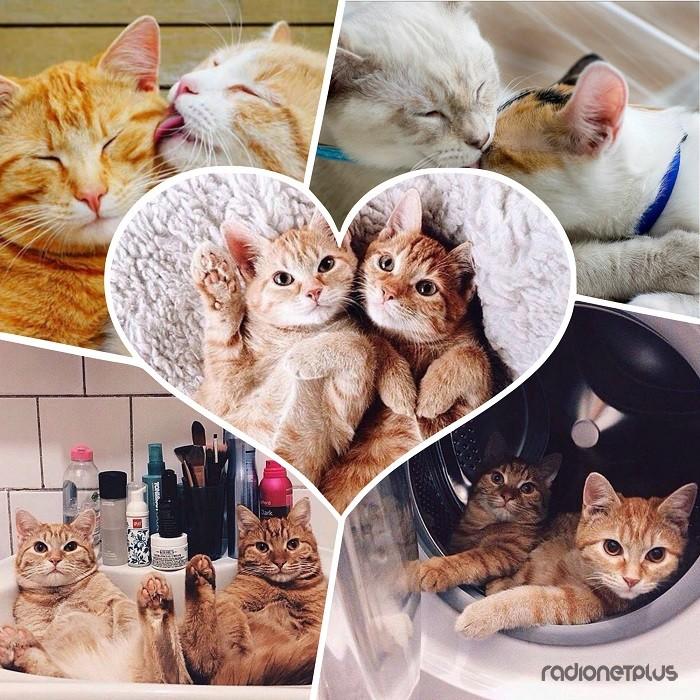 Милота кошачья, беззаветно любящая. Улыбка и бесконечный позитив в каждом кадре!