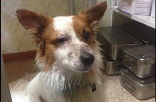 Девушка прыгнула в реку спасать пса, которого топили и избивали у нее наглазах!