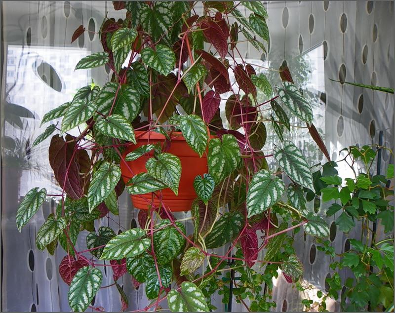 Как ухаживать за комнатными растениями зимой.