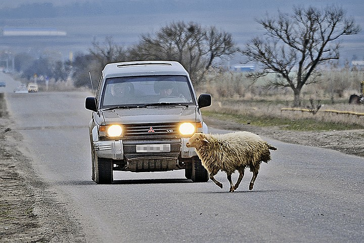 Ограничение скорости в населенных пунктах: как не схлопотать штраф