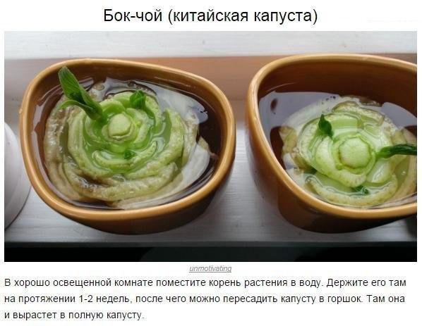 Овощи, которые можно купить один раз, а потом выращивать круглый год