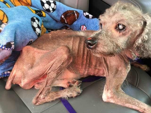 Прохожая спасла брошенного пса, который так долго голодал, что забыл, как есть